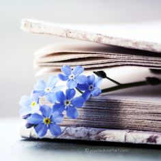 blue flowers blue flowers The post blue flowers appeared first on Ideas Flowers. blue flowers blue flowers The post blue flowers appeared first on Ideas Flowers. Flower Aesthetic, Book Aesthetic, Character Aesthetic, Book Flowers, Wild Flowers, Photo Book, Photo Art, Beautiful Flowers, Beautiful Pictures