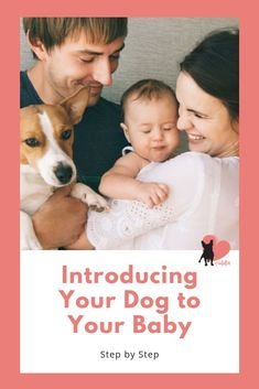Introducing Your Dog to Your Baby Step by Step Dog Halloween Costumes, Dog Costumes, Baby Sounds, Animal Antics, Dog Safety, Newborn Care, Baby Steps, Dog Training Tips, Dog Owners