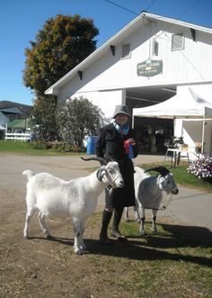 2013 Vermont Goat Show Pictures Vermont, Goats, Cashmere, Pictures, Animals, Photos, Cashmere Wool, Animales, Animaux