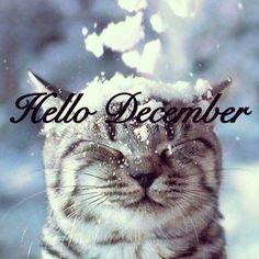 Buongiorno hello december