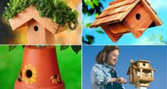 10 Charming DIY Birdhouse, making them very easy and they are cheap also. The Birdhouse is also beneficial for you because some birds eliminate pests. Grow Ginger From Root, Growing Ginger, Growing Hibiscus, Hibiscus Plant, Best Flowers For Bees, Amazing Flowers, Blue Flowers, Nail Swag, Flowers Perennials