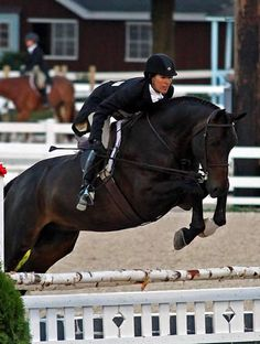 hunter derby horse - Google Search