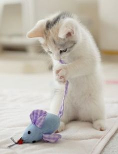 cute kitten playing with mouse toy