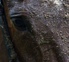 Muddy racehorse Clonmel Photo Patrick McCann 06.03.2014 Racehorse, Shots, Racing, Horses, Random, Artist, Animals, Running, Animales