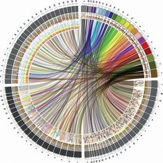Circle of Life: The Beautiful New Way to Visualize Biological Data - Wired Science 3d Data Visualization, Information Visualization, Information Design, Information Graphics, Science Art, Data Science, Dna, Circle Of Life, Sacred Geometry