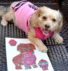 Dogs Designer Dogs Yorkipoo Yorkie Poo Pumpkin Halloween Dog