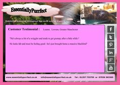 Customer Testimonial of EssentiallyPurrfect #mobile #MaineCoon #cat #catgrooming service.  Leanne #Lowton #Manchester