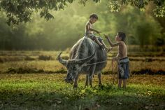 Peasant children playing with his buffalo. by Jakkree Thampitakkul on 500px