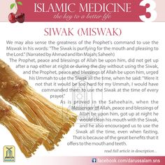 Using Siwak has following benefits (1) It kills germs. (2) It removes food remnants and yellowness from the teeth, (3) It purifies the mouth by killing germs and treats wounds and inflammation of the gums. (4) It prevents the growth of germs by increasing acidity in the mouth. (5) It removes plaque before it becomes hard. (6) It prevents diseases of the mouth and teeth. (7) It has been proved that it effectively reduces sugar levels and has an anti-cancer effect.