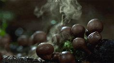 Time Elapsed growth of mushrooms! #gif