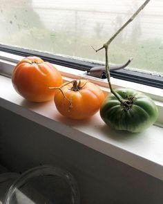 #LastTomatoes . . . . . . , . . . . . #tomatoes #lasttomatoesoftheseason #ripen #tomato #vegetablegarden #vegetablegardening #gardener #garden #growth #vegetablegardens #growfood #growth #growfoodnotlawns #raisedbeds #harvest #cultivate #lastoftheseason Raised Beds, Pumpkin, Vegetables, Food, Pumpkins, Essen, Flower Beds, Vegetable Recipes, Meals