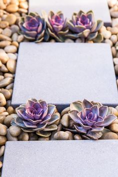 Clean-lined square pavers rest between pebbles in this modern, zen-like garden space, which features rows of succulent plants.