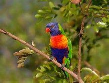 Rainbow Animals - Bing Images