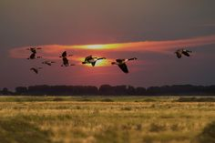 Crystal Contrast - Geese over Farlington Marshes, Portsmouth,