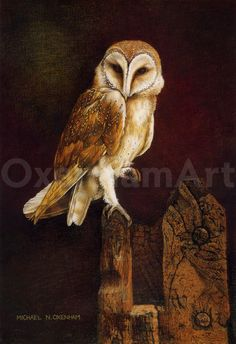 Owl, Bird, Prints, Animals, Animales, Animaux, Owls, Birds, Animal