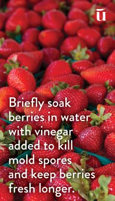 Briefly soak berries in water with vinegar added to kill mold spores and keep berries fresh longer #LuvoTips