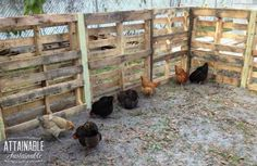 A recycled pallet chicken run is a good way to create more space for your hens to peck. This easy chicken coop extension is a cheap & easy DIY pallet fence. Chicken Fence, Chicken Coop Kit, Chicken Coop Pallets, Cheap Chicken Coops, Portable Chicken Coop, Chicken Runs, Chicken Houses, Small Chicken, Chicken Lady