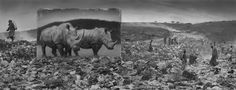 New Works by Nick Brandt : Inherit the Dust - The Eye of Photography