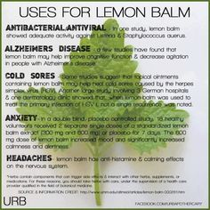 Lemon Balm uses. Great, growing some in the garden now!                                                                                                                                                                                 More