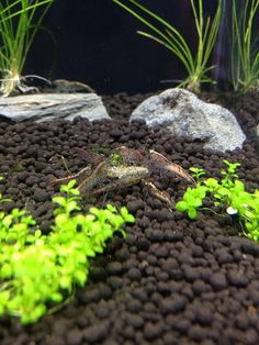 best low maintenance substrate for aquarium - Google Search