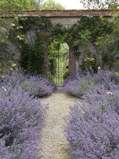 seems I should be able to find a place for this....my Boulder yard loves lavender....maybe out toward the back gate. #SecretGarden