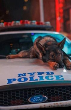 NYPD K-9