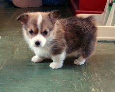 When I'm ready for a new dog....I want this one!!!!
