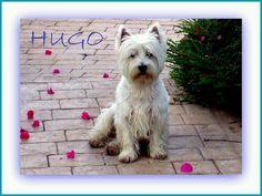 Hugo de Westy Hugo y sus amigos
