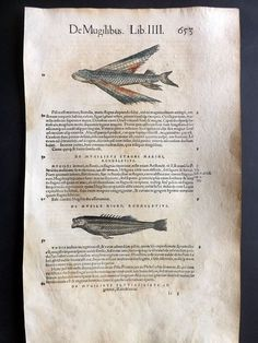 http://www.ebay.com/itm/Gesner-1558-Antique-Hand-Col-Woodcut-Flying-Fish-653-/331618650679?