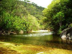 #RUTA_ISTÁN #CHARCO_DEL_ CANALÓN, esta #ruta transcurre por un camino rural que acompaña al Río Verde, llamado así por el color de sus aguas, producido por la abundante cantidad de algas acuáticas existentes. La vegetación y fauna de ribera se conjugan con un espectacular entorno de pinos y alcornoques, sauces, fresnos, adelfas e higueras. En su recorrido hasta el Charco del Canalón encontramos pozas de agua.