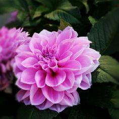 Inspiration :) - @drphotography_ #hongkong #hk #flower