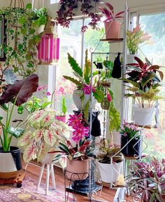 Caladium - In the Garden Hanging Plants, Potted Plants, Garden Plants, Indoor Plants, House Plants Decor, Plant Decor, Plantas Indoor, Decoration Plante, Pink Plant