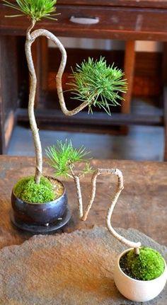 11月の盆栽・苔玉ワークショップのご案内 : Kitowaの日々