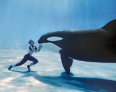 Would love to visit Sea World, this looks incredible! Whales are my all time favorite animal, ever! #EpicSummerRun