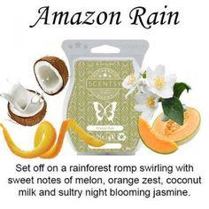amazon rain scentsy wax bar