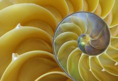 """Nautilus"" by David Vaughan, via 500px."
