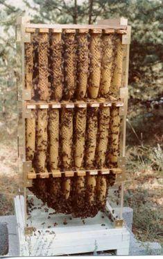 http://www.apiculturegatineau.fr/ruchplexiabeilbas.jpg