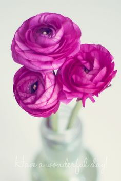 flowers-close-up-blossom.png (500×750)