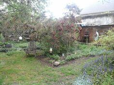 Our Smithville  Ontario  Garden,