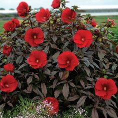 Hibiscus Flowers, Red Flowers, Lilies Flowers, Cactus Flower, Flowers Garden, Exotic Flowers, Summer Flowers, Yellow Roses, Pink Roses
