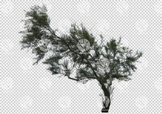 Evergreen tree cutout by Gobotree