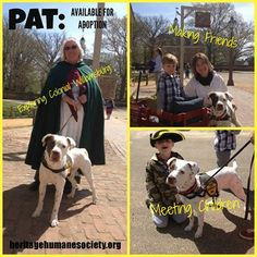 Pat is a beautiful 2 yr old female weighing 57 lbs. Visit Heritage Humane Society to come meet Pat in person! #HeritageHumaneSociety