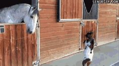 Goat plays with horse - http://www.seethisordie.com/animalsbeingbros/goat-plays-with-horse/ #animals #cats #funny #fun
