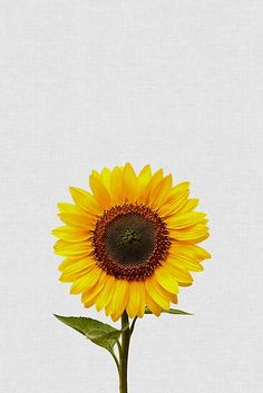 """Faith, brilliance, loyalty and affection are the connotations of sunflower. The implied meaning is """"silent love"""".Hope the sunflower wallpaper can help you find the happiness you want ,and the sunlight that belongs to you! Sunflower Iphone Wallpaper, Sunflower Canvas, Sunflower Drawing, Sunflower Pictures, Canvas Art, Canvas Prints, Canvas Frame, Orchid Care, Art Mural"""