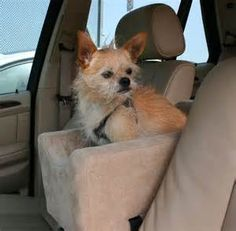 double dog car seat harness - Yahoo Image Search Results