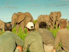 Field Guide and Nature Training South Africa - Book your field guide or ranger training with Ecotraining.