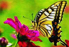 terram novam: Angel Wisdom: Moving On - February 3, 2014 - YouTube