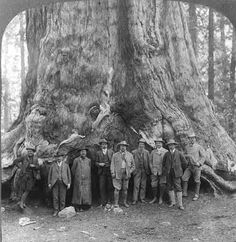 John Muir at Grizzly Giant Tree in Yosemite