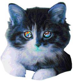 cat gif, megarave