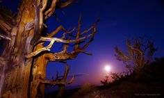 """Cinco de Mayo with the Ancients"" - moonrise (""the supermoon of 2012) in the Bistlecone Pine Forest - Big Pine, CA"